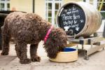 New Forthglade Dog Friendly Pub of the year open for entry